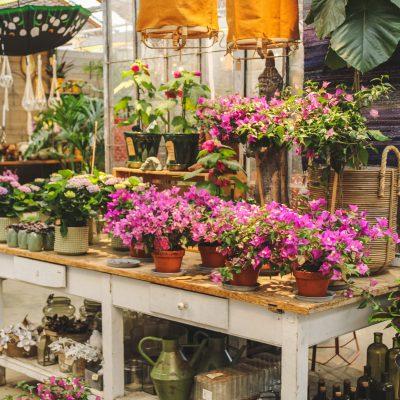 Rosehills Blommor